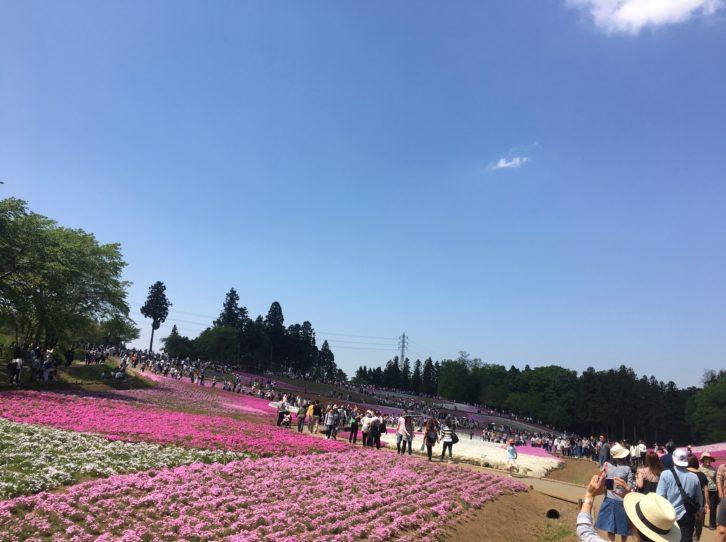 芝桜の丘の写真