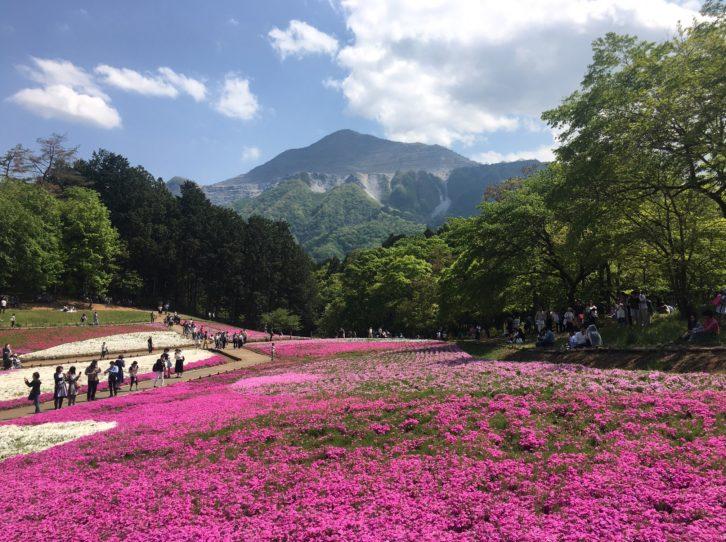 芝桜のベストショット